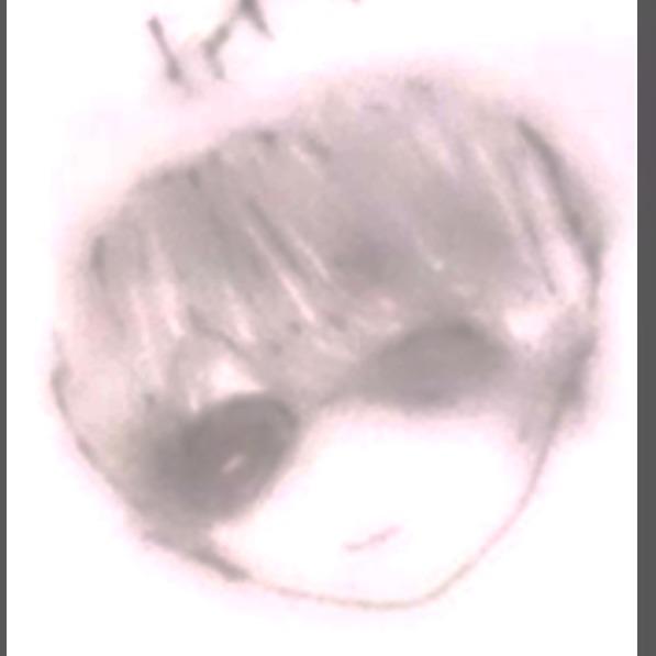 カイザーのプロフィール画像