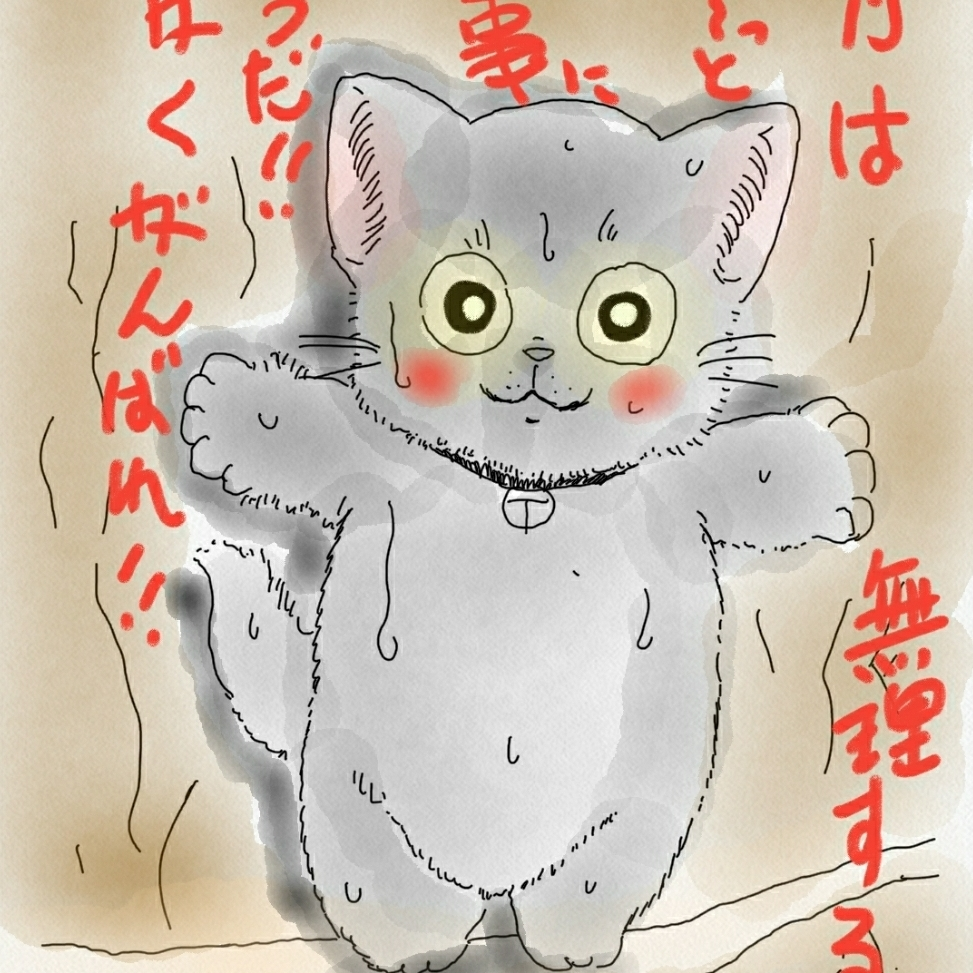 龜さんちゃんのプロフィール画像
