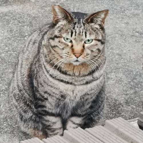 kengoのプロフィール画像