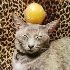 猫山猫一のプロフィール画像