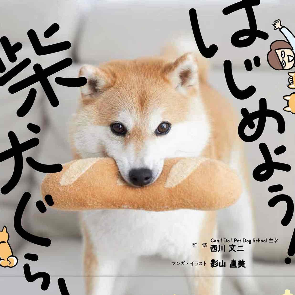 柴犬🐕じゅんのプロフィール画像